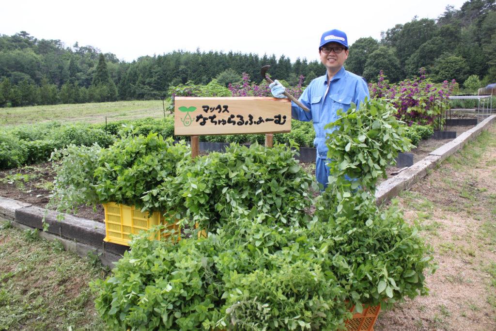 自社農園「なちゅらるふぁーむ」で、原材料として使うサボンソウやどくだみなどの無農薬栽培を行う。