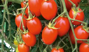 農家と買い手のギャップを埋める産直野菜マーケット